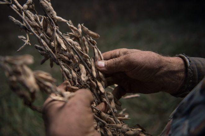 soybean-american-trade-war-tariffs-december-2018-1024x681