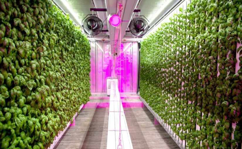 The Counter: What does a vertical farm taste like?