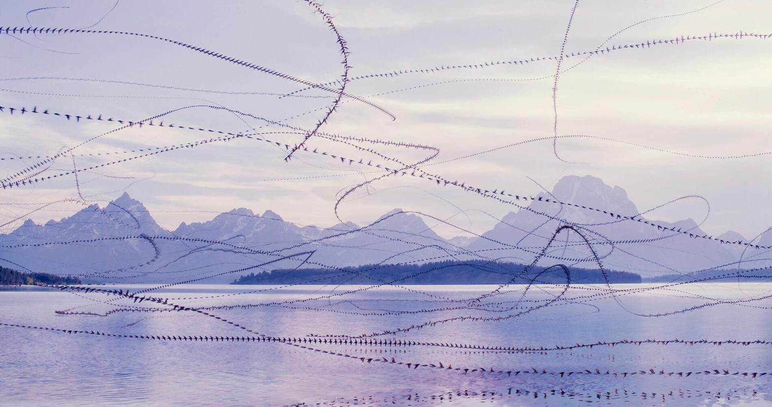 Tree Swallows, Grand Teton. Photo: Xavi Bou